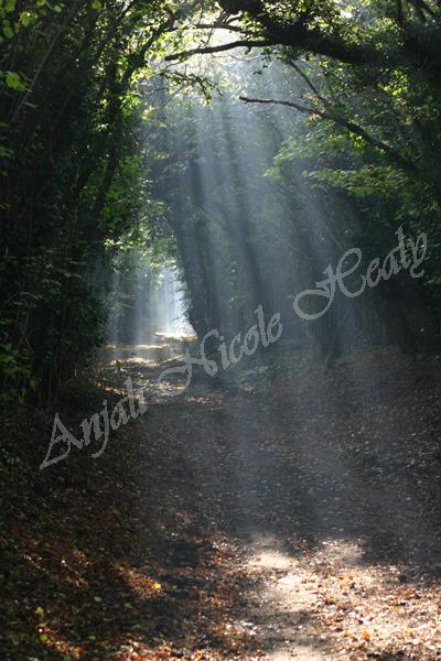 Rays of Light on Ebbisham Lane