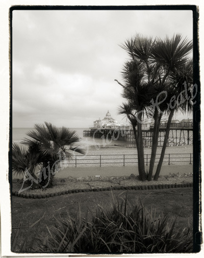 Eastbourne Pier & Palms