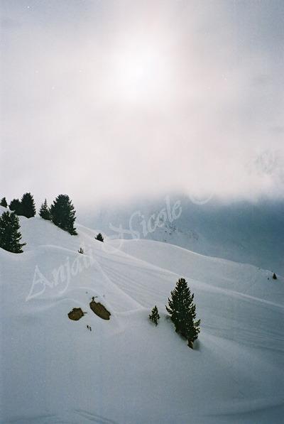 Snow Mists