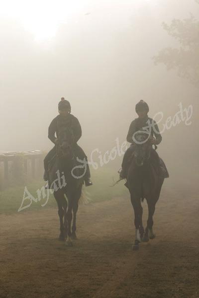 Walking in the Morning Mist