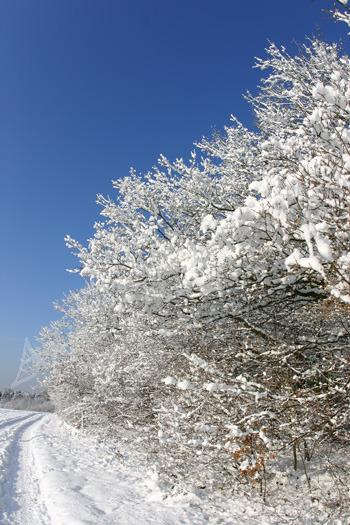 Winter Blue & Whites