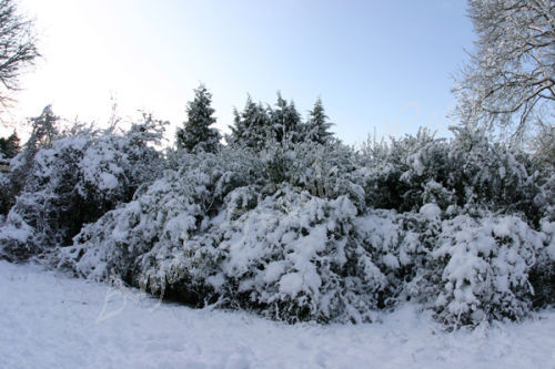 Winter Sky Blues