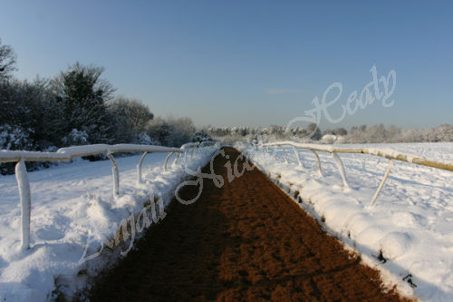 Winter Gallops