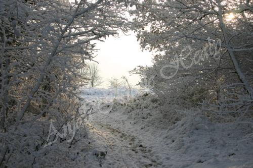 Winter Wonderland Glow