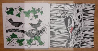 Nesting blackbirds, woodpecker