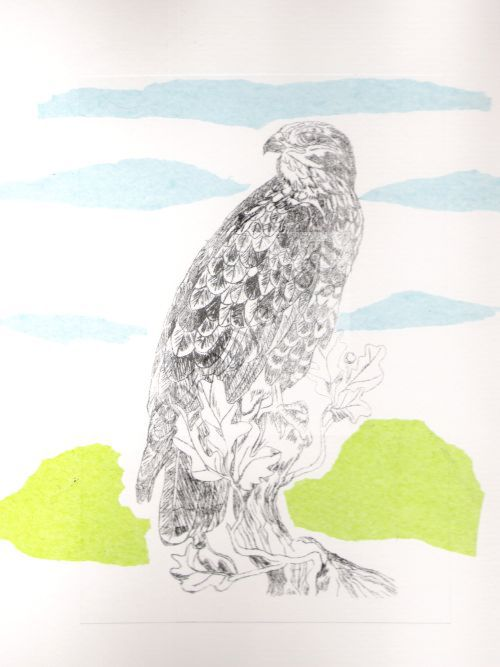 Buzzard drypoint with chine colle