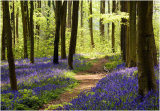 A Walk in Spring