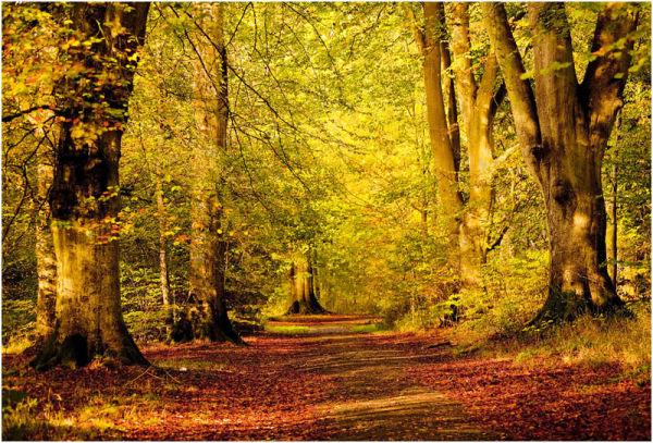 C An Autumn Walk