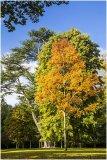 Autumn 16