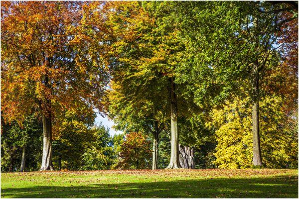 Autumn 52