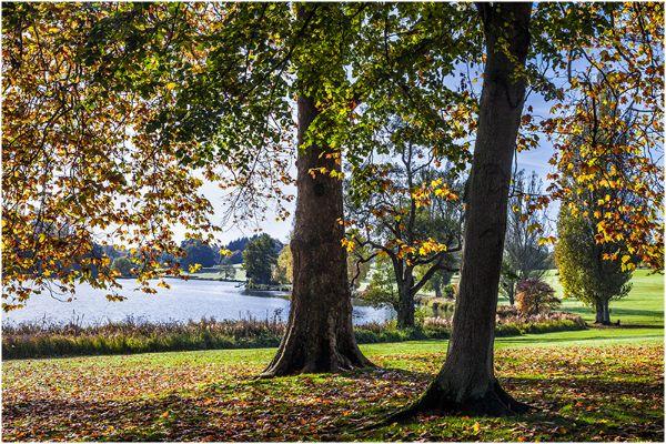 Autumn 53