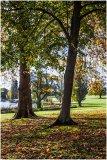Autumn 54