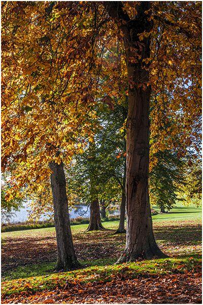 Autumn 57