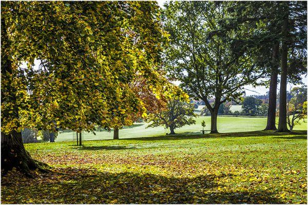 Autumn 61