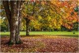 Autumn 64
