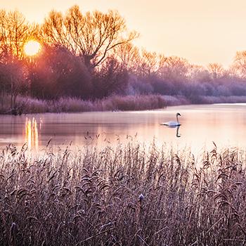 GL _03 Frosty Sunrise