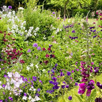 WG_03 In the Hidden Garden