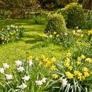 WG_05 Daffodil Delight