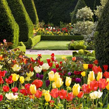 WG_08 Tulipmania