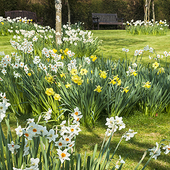 WG _15 Spring Garden