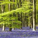WL_02 Woodland Spring