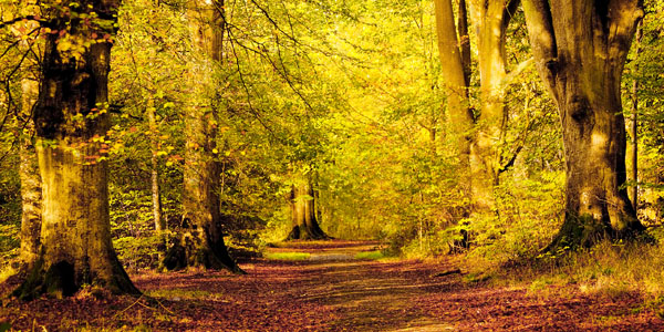 PWL_02 An Autumn Walk