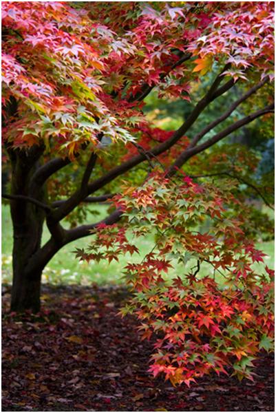 Westonbirt Trees 22