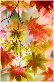 Westonbirt Leaves 18