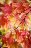 Westonbirt Leaves 5