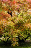 Westonbirt Trees 15
