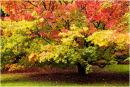 Westonbirt Trees 16