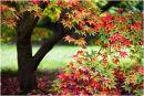 Westonbirt Trees 21