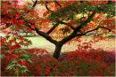 Westonbirt Trees 4
