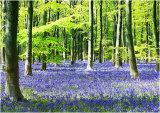 C Woodland Spring