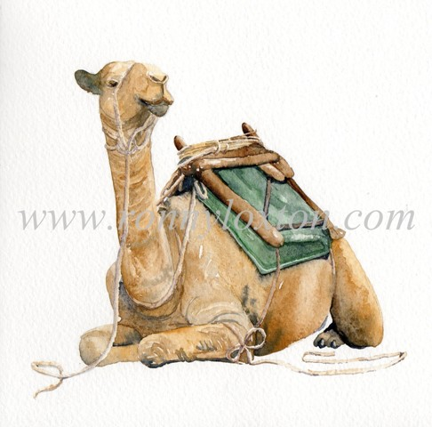 Pack camel