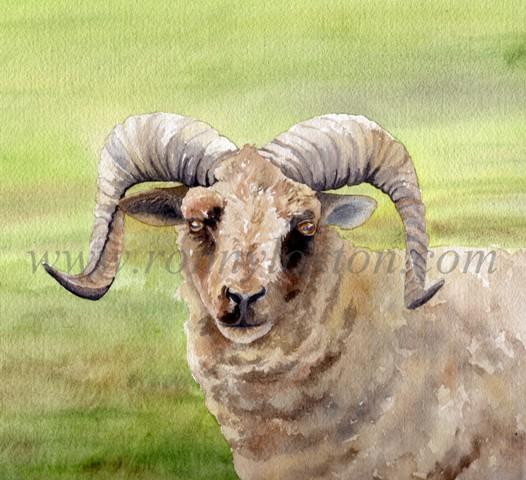 Castlemilk Moorit Ram