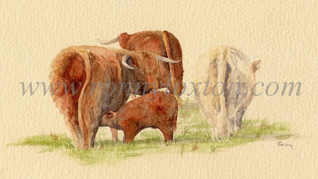 Three Highland Cattle and Calf