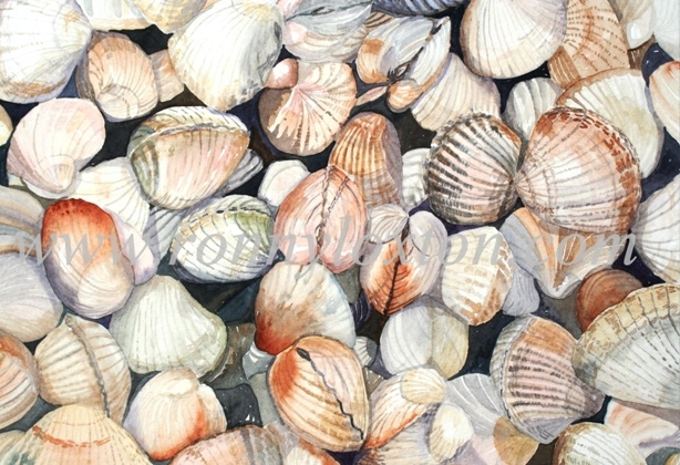 188 Cockles