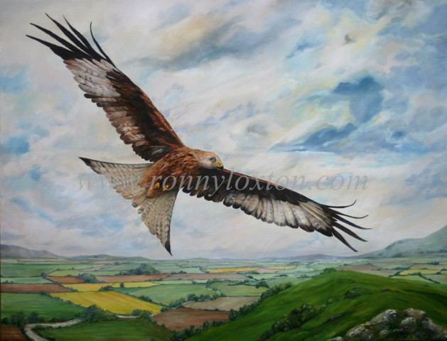 320 Red Kite over Oxfordshire