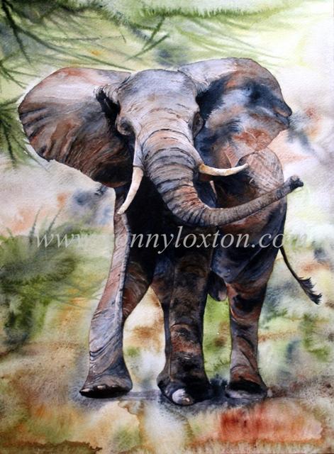 411 Ruaha Elephant