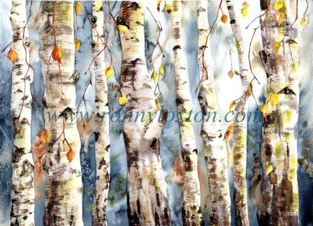 453 Silver Birch