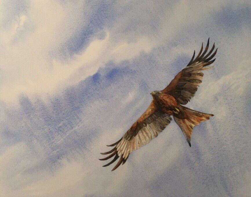 59 Red Kite
