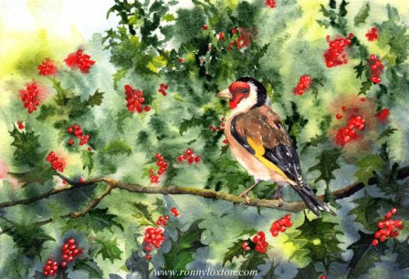 Holly Goldfinch CC1