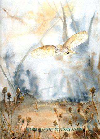 PCL3 Barn Owl & Teasles