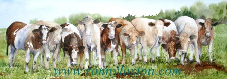 PCPM1 Cattle 10
