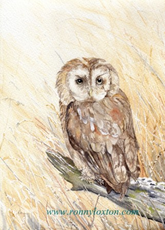 PCS1 Tawny Owl