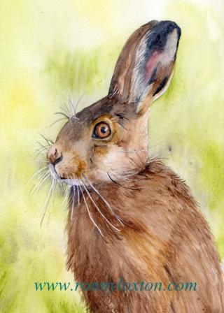 PCS2 Hare