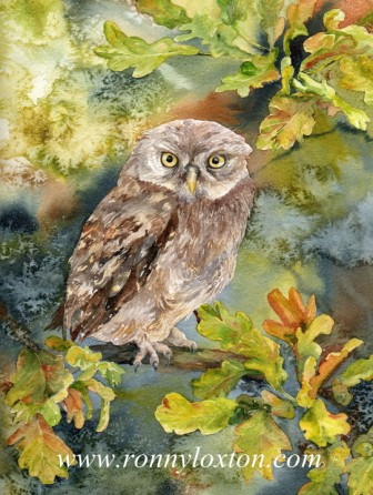 PCS2 Little Owl