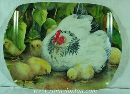 TM9 Light Sussex & Chicks