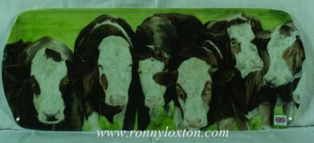 TSAND5 Cattle